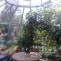 15 m² lustväxthus invändigt
